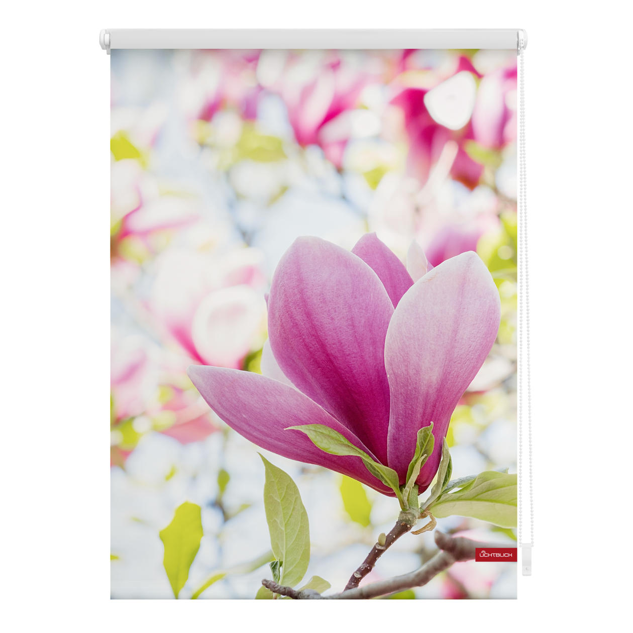 rollo klemmfix ohne bohren blickdicht magnolie rosa. Black Bedroom Furniture Sets. Home Design Ideas