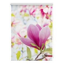rollo klemmfix ohne bohren blickdicht magnolie rosa lichblick shop. Black Bedroom Furniture Sets. Home Design Ideas